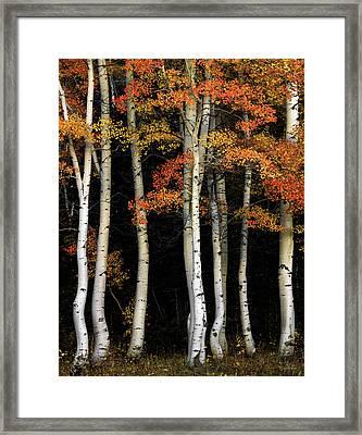 Aspen Contrast Framed Print by Leland D Howard