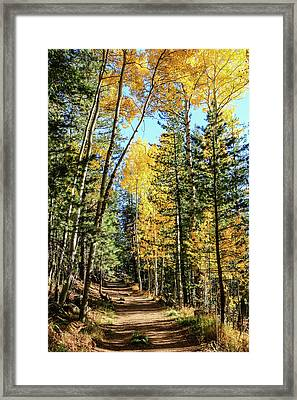 Aspen Trail Framed Print