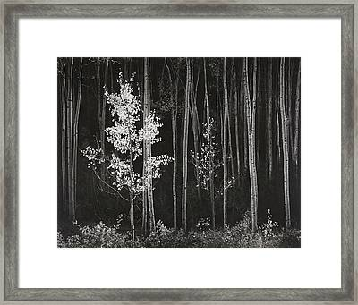 Aspens Northern New Mexico Framed Print