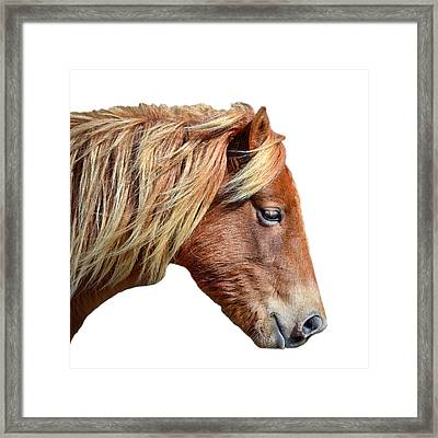 Framed Print featuring the photograph Assateague Pony Sarah's Sweet On White by Bill Swartwout Fine Art Photography
