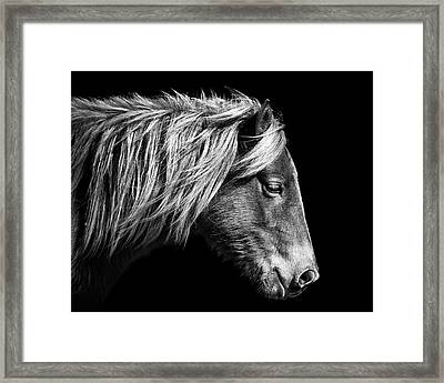 Framed Print featuring the photograph Assateague Pony Sarah's Sweet Tea B And W by Bill Swartwout Fine Art Photography