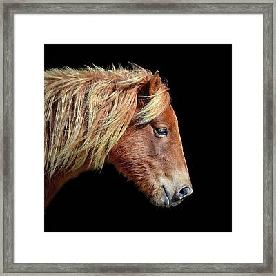 Framed Print featuring the photograph Assateague Pony Sarah's Sweet Tea On Black Square by Bill Swartwout Fine Art Photography