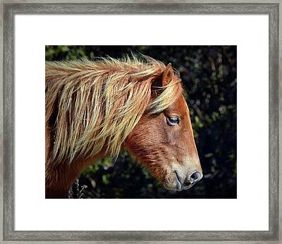 Framed Print featuring the photograph Assateague Pony Sarah's Sweet Tea Profile by Bill Swartwout Fine Art Photography