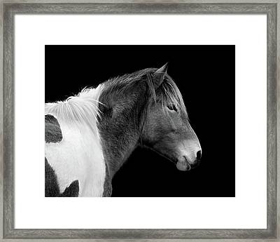 Framed Print featuring the photograph Assateague Pony Susi Sole Black And White Portrait by Bill Swartwout Fine Art Photography