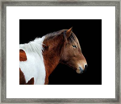 Framed Print featuring the photograph Assateague Pony Susi Sole Portrait On Black by Bill Swartwout Fine Art Photography