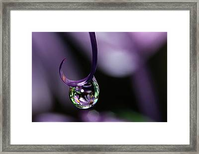 Framed Print featuring the photograph Asters by Michelle Wermuth