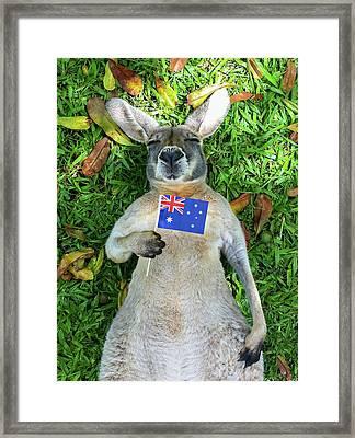 Australian Kangaroo Framed Print by Mb Photography