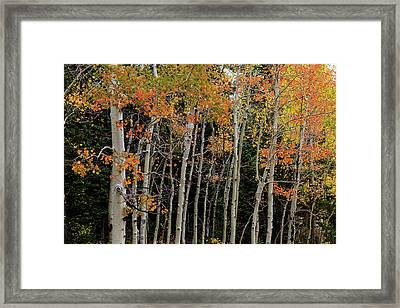 Framed Print featuring the photograph Autumn As The Seasons Change by James BO Insogna