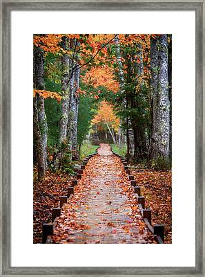 Autumn At Jesup Path Framed Print