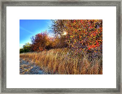 Framed Print featuring the photograph Autumn At Magpie Forest by David Patterson