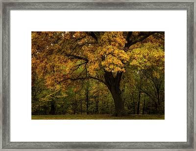 Framed Print featuring the photograph Autumn Beauty by Scott Bean
