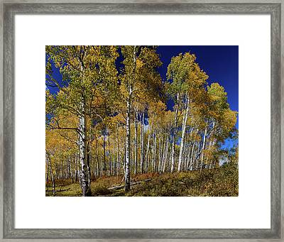 Framed Print featuring the photograph Autumn Blue Skies by James BO Insogna