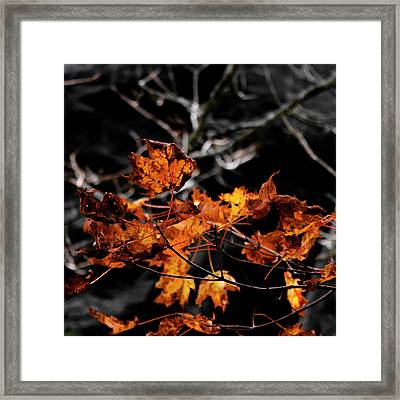 Autumn Brown Framed Print by Christine Buckley