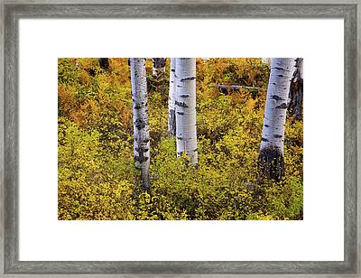 Autumn Contrasts Framed Print