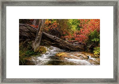 Framed Print featuring the photograph Autumn Dogwoods by TL Mair