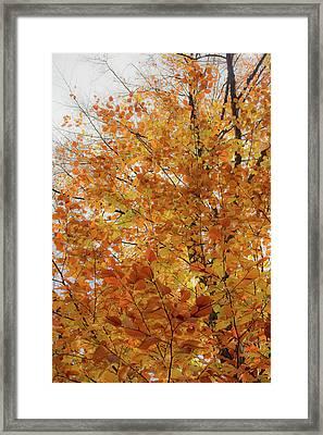 Autumn Explosion 1 Framed Print