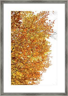 Autumn Explosion 2 Framed Print
