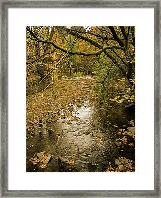 Autumn Forest Framed Print