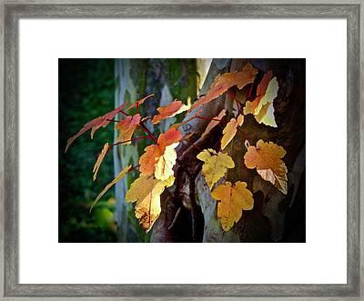 Autumn Gold Framed Print