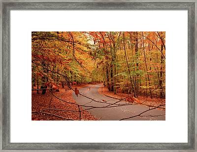 Autumn In Holmdel Park Framed Print