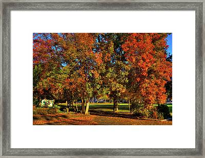 Framed Print featuring the photograph Autumn In Reaney Park by David Patterson