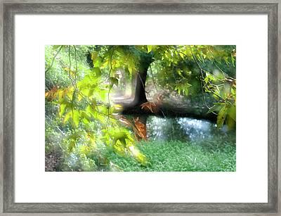 Autumn Leaves In The Morning Light Framed Print