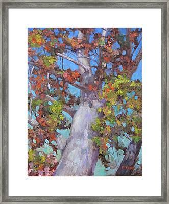 Autumn Oak Framed Print