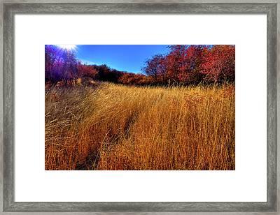 Framed Print featuring the photograph Autumn Path by David Patterson