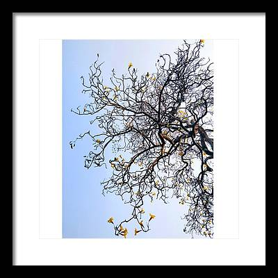 Autumn Framed Prints