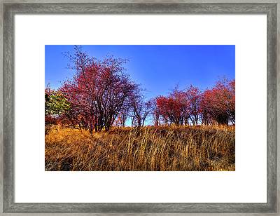 Framed Print featuring the photograph Autumn Sun by David Patterson