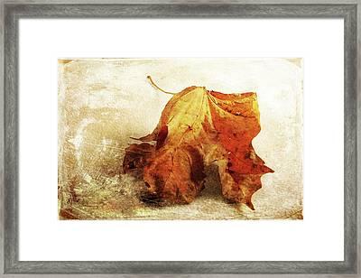 Framed Print featuring the photograph Autumn Texture by Randi Grace Nilsberg