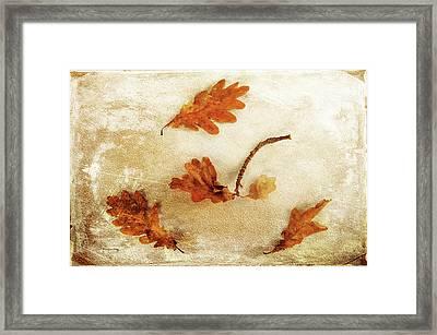 Framed Print featuring the photograph Autumn Twist by Randi Grace Nilsberg