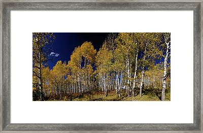 Framed Print featuring the photograph Autumn Walk In The Woods by James BO Insogna