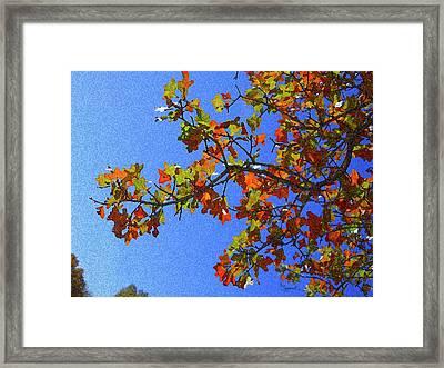 Autumn's Colors Framed Print