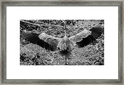Time To Spread Your Wings Framed Print