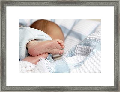 Babys Feet And Toes Showing Heel Prick Framed Print by Tirc83