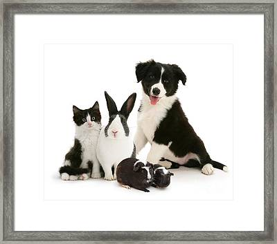 Framed Print featuring the photograph Back-and-white Is Alright by Warren Photographic