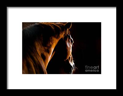 Thoroughbred Racing Framed Prints