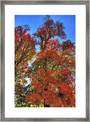 Framed Print featuring the photograph Backlit Autumn by David Patterson