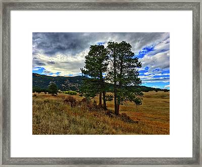 Framed Print featuring the photograph Backlit Pine by Dan Miller