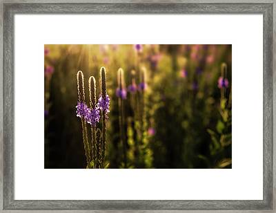 Framed Print featuring the photograph Backlit by Scott Bean