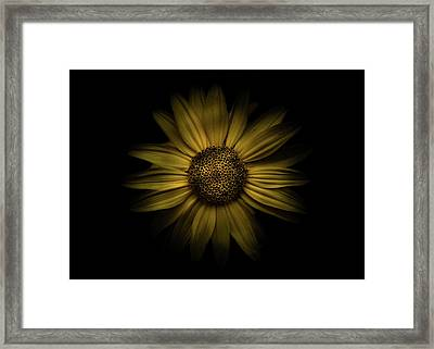 Framed Print featuring the photograph Backyard Flowers 18 Color Version by Brian Carson