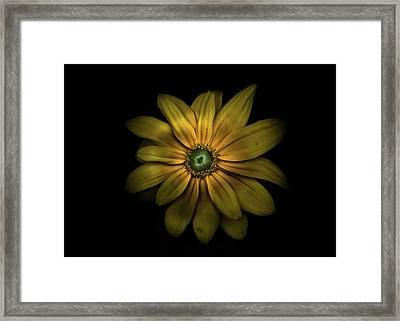 Framed Print featuring the photograph Backyard Flowers 34 Color Version by Brian Carson