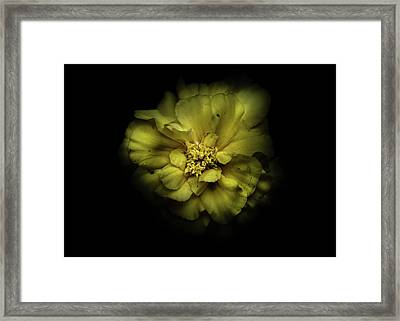 Framed Print featuring the photograph Backyard Flowers 41 Color Version by Brian Carson