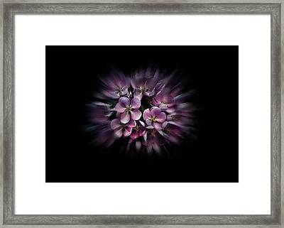 Framed Print featuring the photograph Backyard Flowers 47 Color Flow Version by Brian Carson