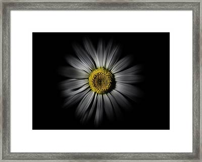 Framed Print featuring the photograph Backyard Flowers 52 Color Flow Version by Brian Carson
