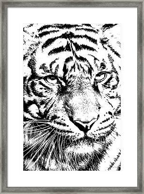 Bad Kitty Framed Print