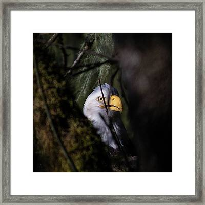 Bald Eagle Behind Tree Framed Print