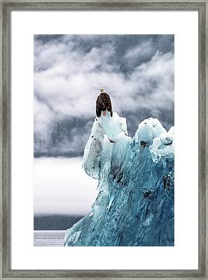 Bald Eagle On The Glacier Framed Print by Naphat Photography