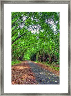 Bamboo Cathedral 2 Framed Print